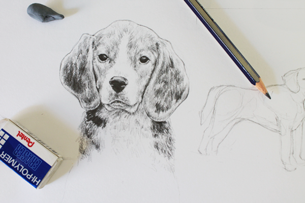Simple Tips For Sketching Animals