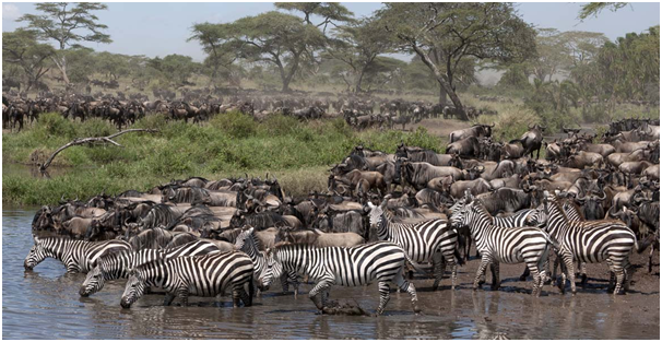 All You Need To Know About The 'Great Annual Migration' In Tanzania