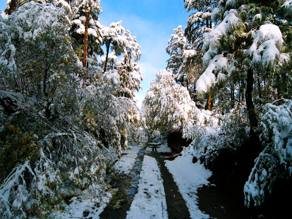 Binsar, The Fantasy Of Every Nature Buff And Bird Lover
