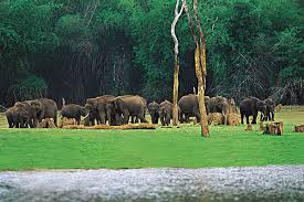 Touring The Amazing Periyar National Park