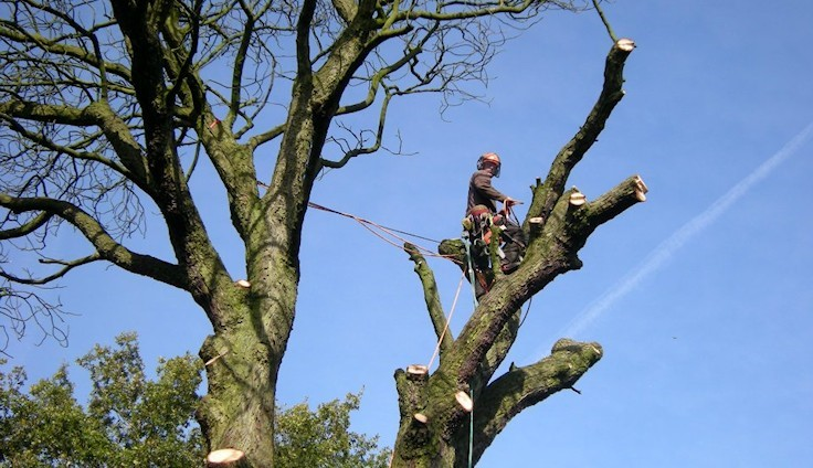 Tree Surgeons Essex- Specialists in Tree Surgery