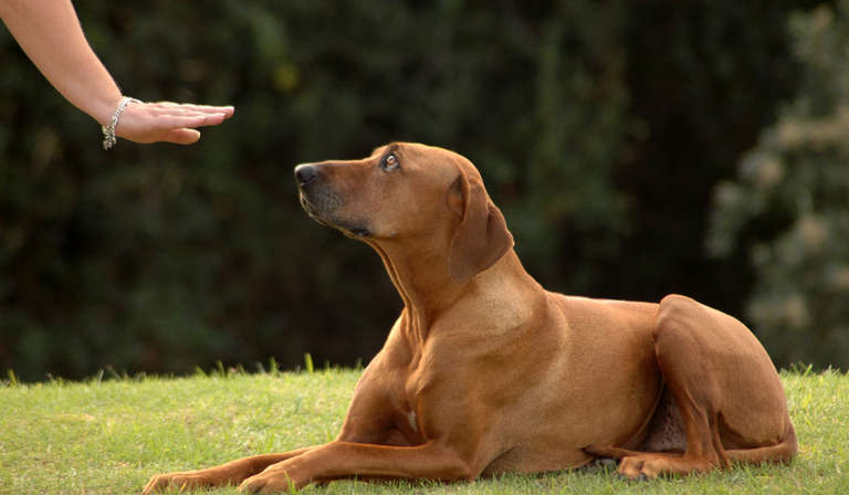 What Should You Expect To Spend On Dog Obedience Training?