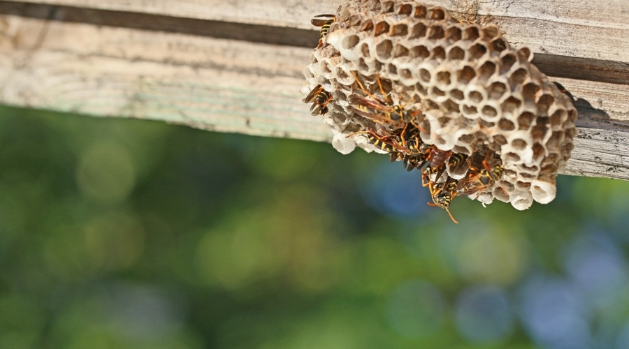 5 Smart Ways To Keep Wasps Away from Your Home