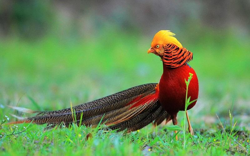 China Birding Tour- 3 Provinces Ideal For Bird Watching-Cum-Photography