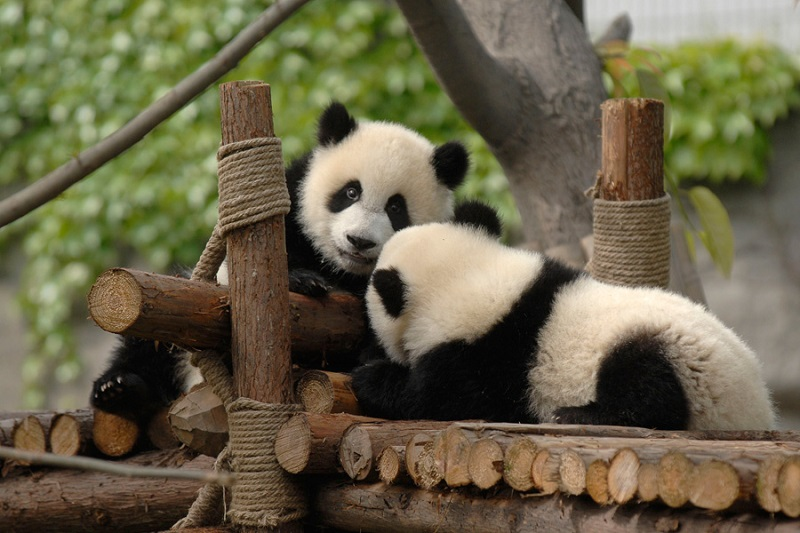 2 Ways To Plan A Blissful Summer Vacation In Chengdu For Your Kids